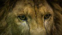 Lõvi kuu ja lõkketuli