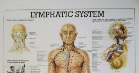 lümfisüsteem