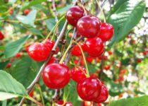 Kirsi-maasika-mustsõstra moos