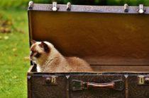 Kuidas reisida ainult käsipagasiga – 13 asja, mis jätta koju