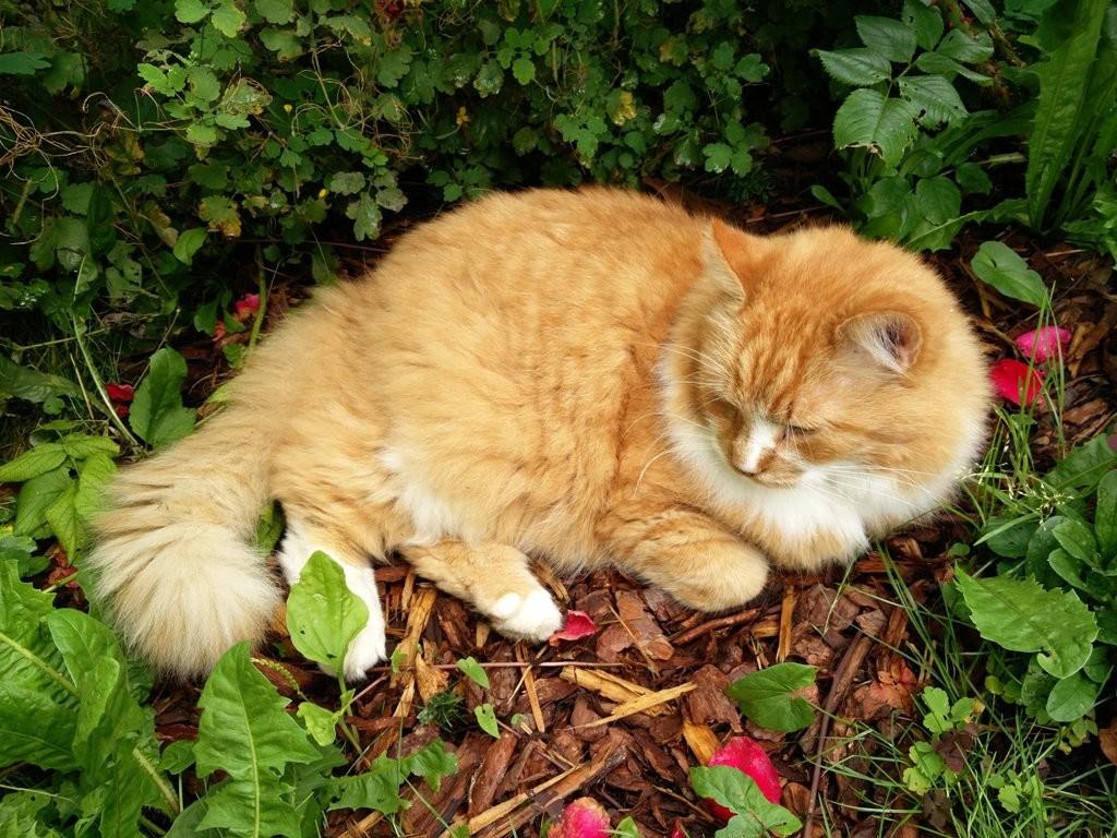 heategu - kassil on oma kodu ja aed