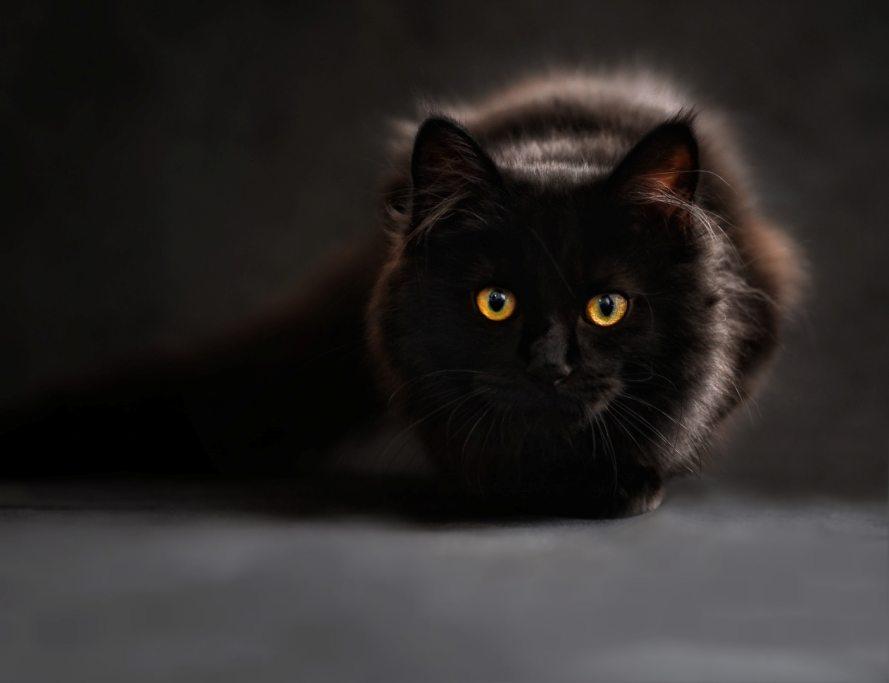 must kass