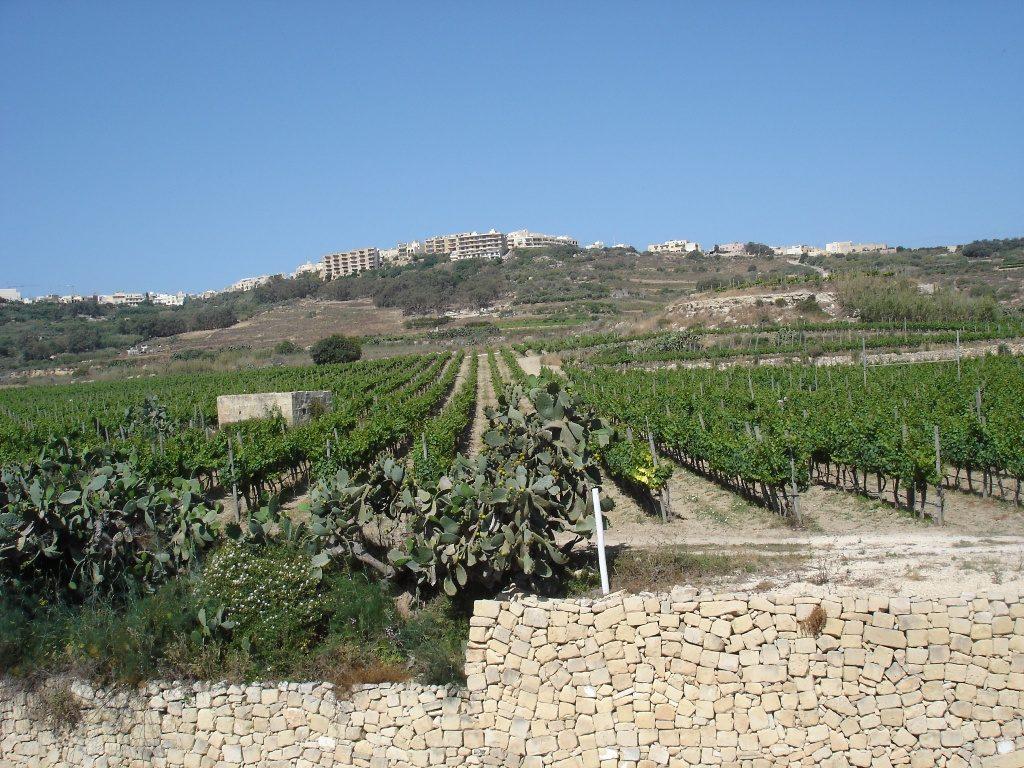 Gozo põllumajandus