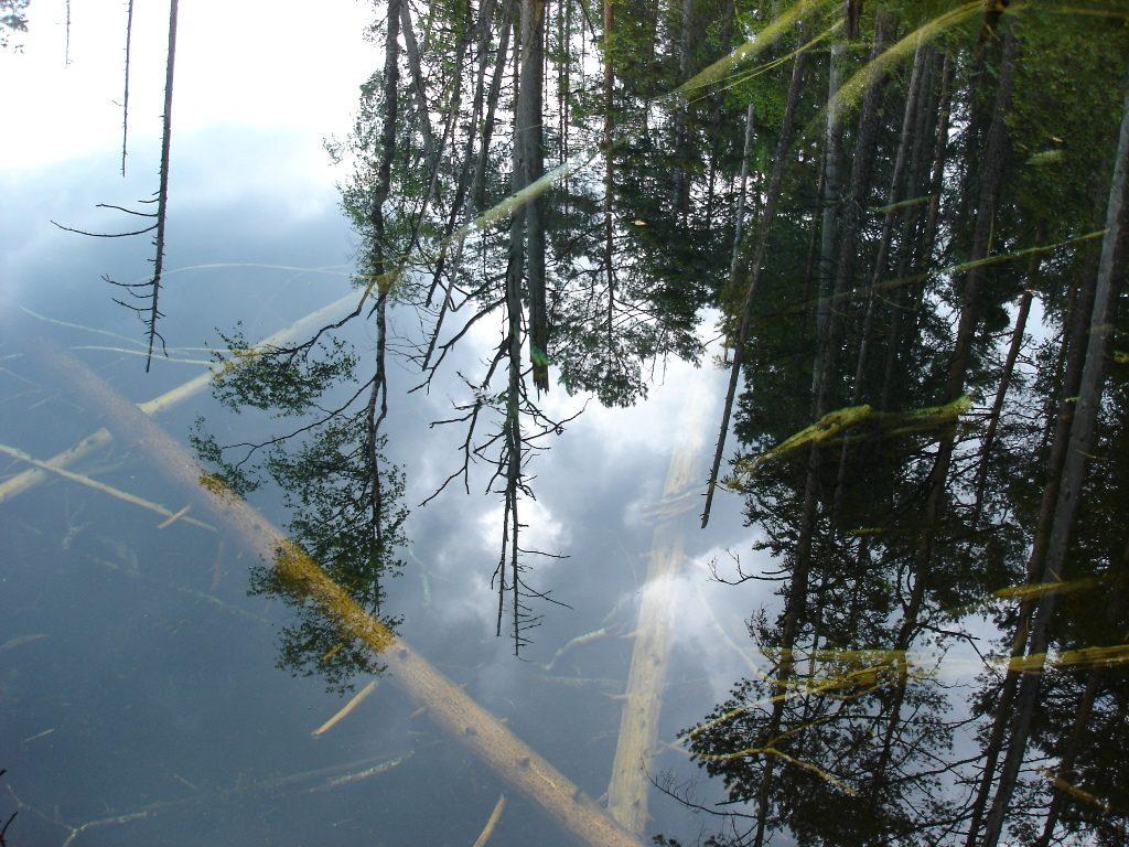 allikas peegelduvad puud