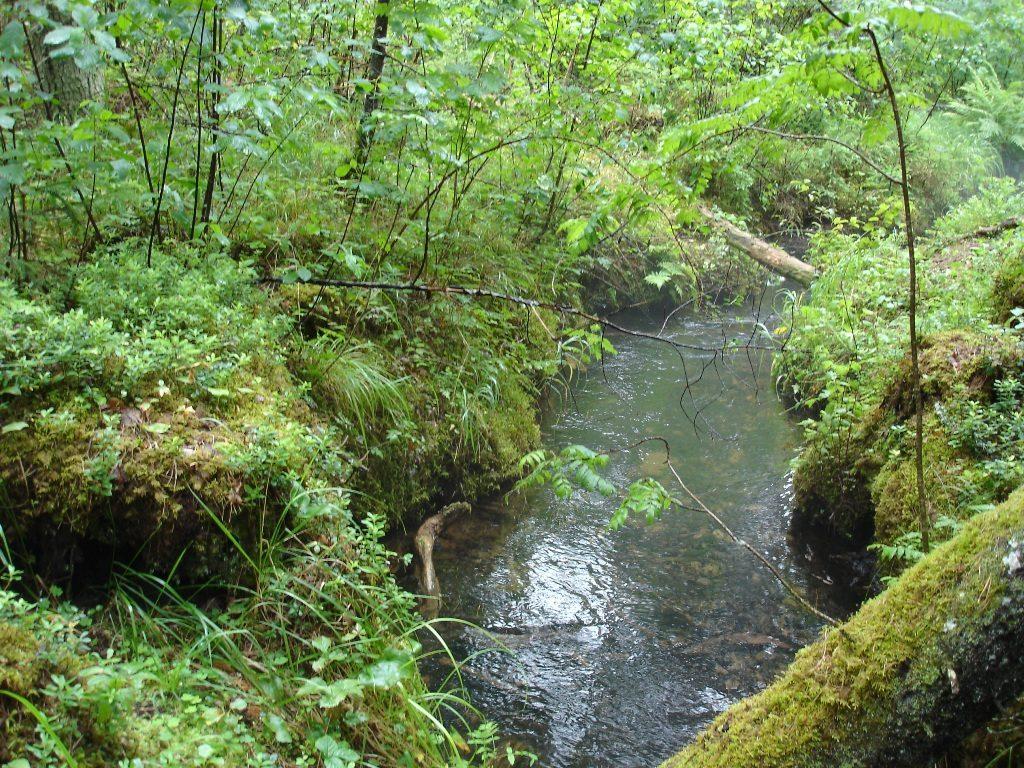 allikast saab jõgi