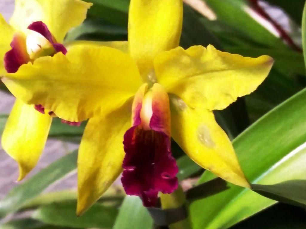 orhidee botaanikaaias