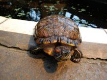 Kuidas ma leidsin kiired ja vihased kilpkonnad