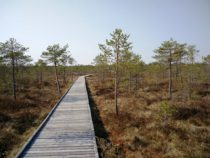 Eestimaa matkarajad: Meenikunno