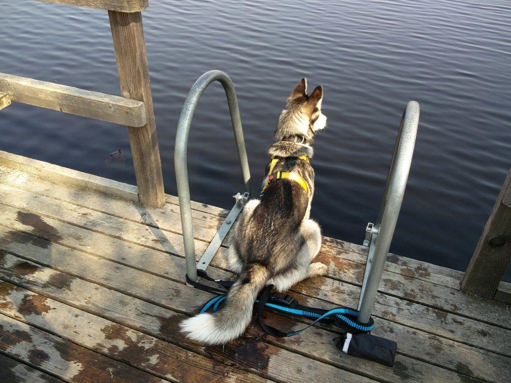 koer soojärve ujumiskohas