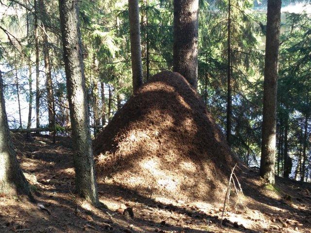sipelgapesa Taevaskoja-Kiidjärve matkarajal