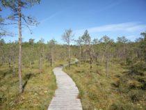 Eestimaa matkarajad: Valgesoo