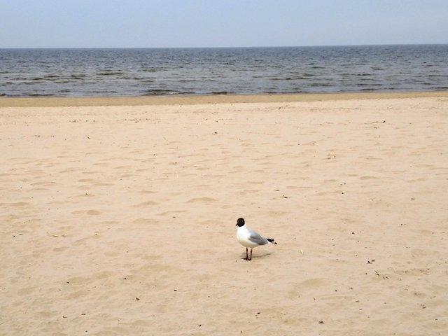 kajakas Jurmala rannas