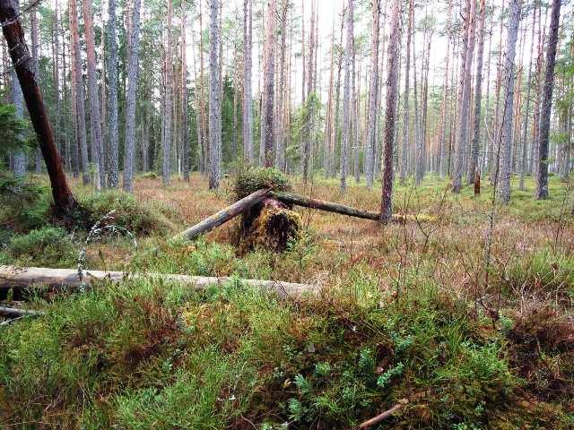 kummaline mets