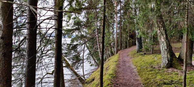 Pühajärve matkarada metsas