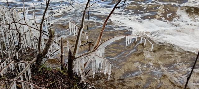 jääpurikad Pühajärve kaldal