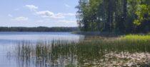 Pööripäeva aja ilu: Kurtna järvestik ja Kuremäe