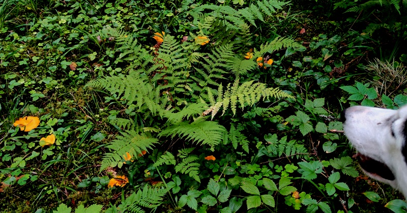 kukeseened metsas
