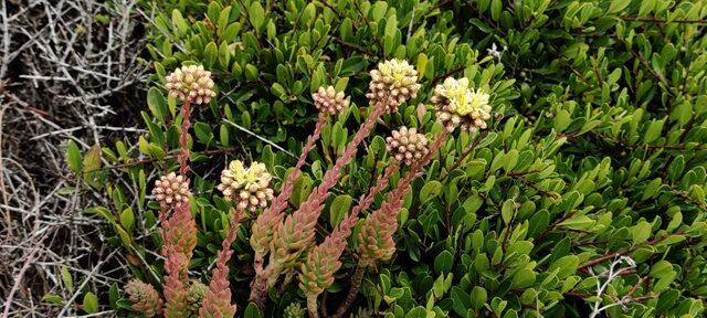 Algarve ranniku lilled