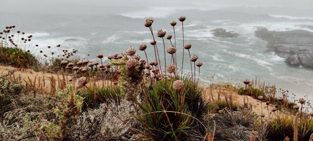 Atlandi ookean ja taimed