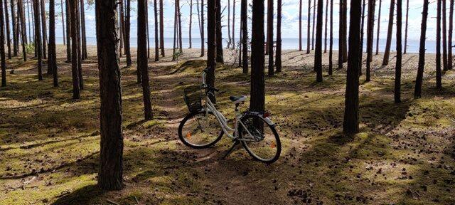 jalgratas metsas